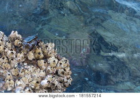 Grey Crab On Wet Stone In Sea