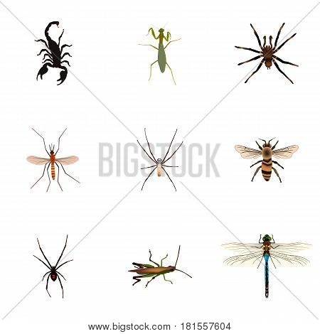 Realistic Locust, Grasshopper, Poisonous And Other Vector Elements. Set Of Animal Realistic Symbols Also Includes Wasp, Arachnid, Dragonfly Objects.