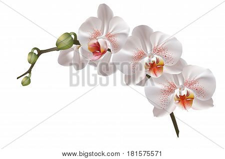 Beautiful and delicate greeting card of white orchid flowers