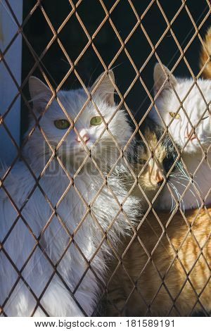 three cats trap and is stuck in a steel wire netting cage,hoping for freedom with sad feeling
