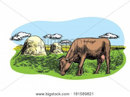 Drawing of cow on the meadow with haystacks and clouds