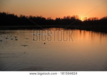 Milan (Lombardy Italy): the park known as Parco Nord at fall. Sunset over the little lake with birds