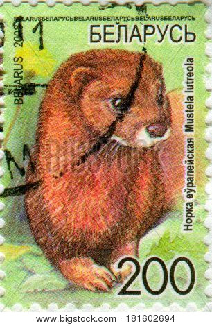 GOMEL, BELARUS, APRIL 13, 2017. Stamp printed in Belarus shows image of  The Mustela lutreola, circa 2008.
