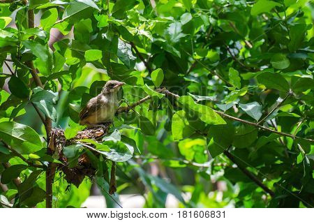 lonely little bird on the green tree branch green garden wildlife soft focus selective focus copy space.