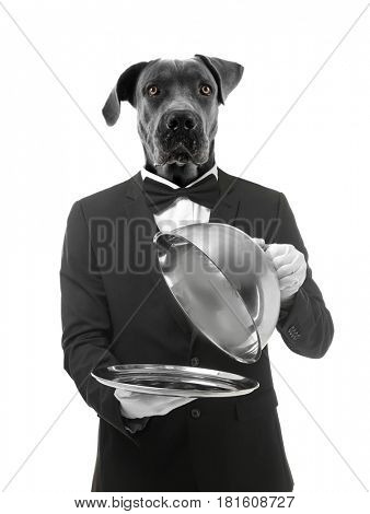 Waiter with head of dog on white background
