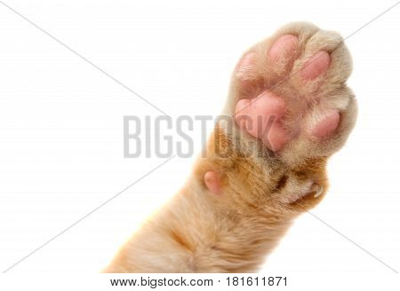 cat's paw animal isolated on white background