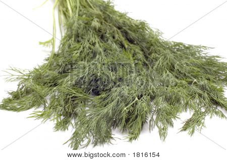 Dill Close Up