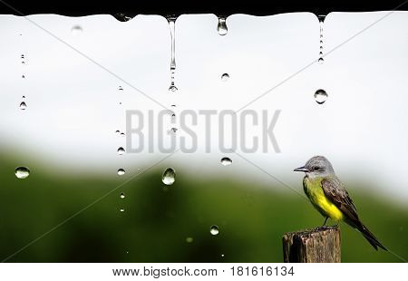 Bird rested on wood during rainy day