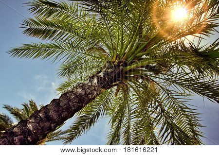 The sun poking through palm trees in the Calabria region of Italy.