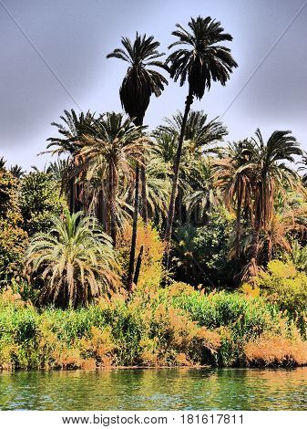 High contrast shot of lush vegetation and tall swaying palm trees on fertile banks of the River Nile, Egypt