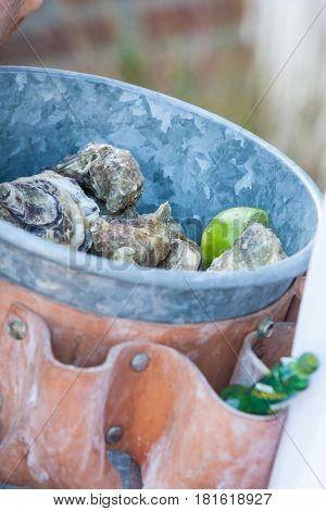 Fresh oysters being given from a bucket on a party