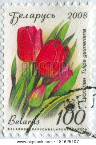 GOMEL, BELARUS, APRIL 13, 2017. Stamp printed in Belarus shows image of  The Tulipa gesneriana, circa 2008.