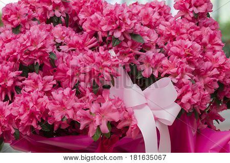 pink flower for any holidays and present