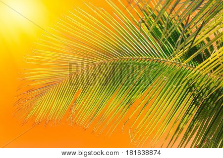 Hot Day In Summer Time, Coconut Palm Leaf At The Beach With Hot Weather Sunny Sky.