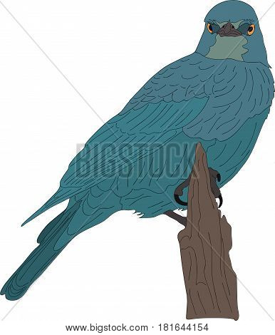 portrait of a wild burchell's starling on a branch of a tree - colored hand drawn vector Illustration isolated on white background