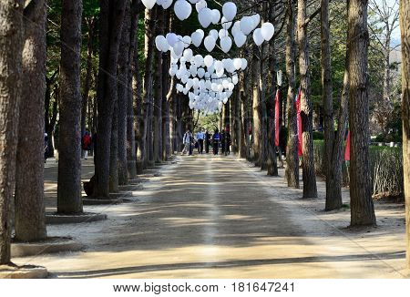 GANGWON-DO SOUTH KOREA - APRIL 6 2017: Tourists walking down the path between rows of trees and white balloons in Nami Island. Namisum is a tiny island in Chuncheon Gangwon- Do South Korea
