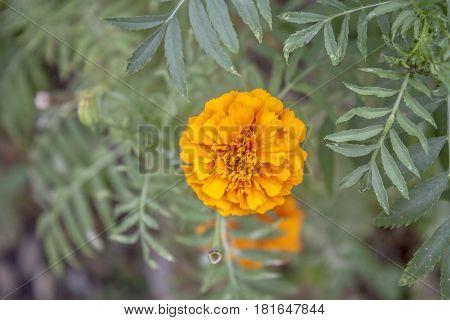 Flor naranja encontrada en jardín de ibague