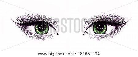 Beautiful open female eyes with long eyelashes is isolated on a white background. Makeup template illustration. Color sketch felt-tip pens. Handwork. Fast schematic drawing