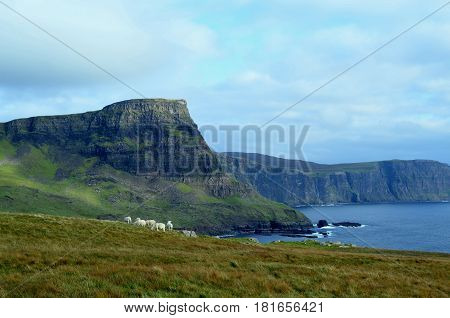 Group of grazing sheep in the Scottish Highlands at Neist Point.