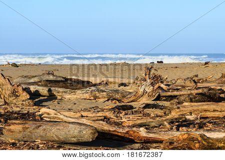 Driftwood on the beach of a central California coast