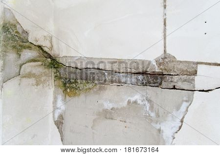 Mold Damage On The Wall Close Up