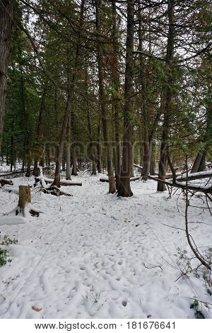 Fresh snow on the forest floor in the Richard H. and Lydia Naas Raunecker Preserve in Harbor Springs, Michigan during November.