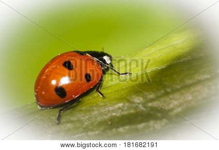 a lady bird or bug on a leaf of grass