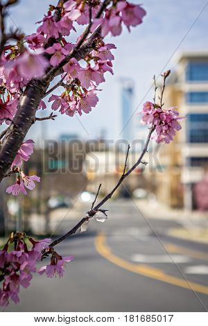 it is spring time in the city