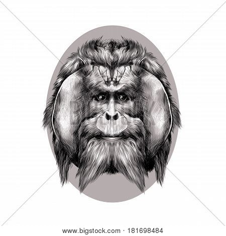 head hairy orangutan symmetry graphics sketch vector black and white pattern on a brown background beige oval circle