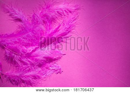Pink feather on pink background, macro, natural