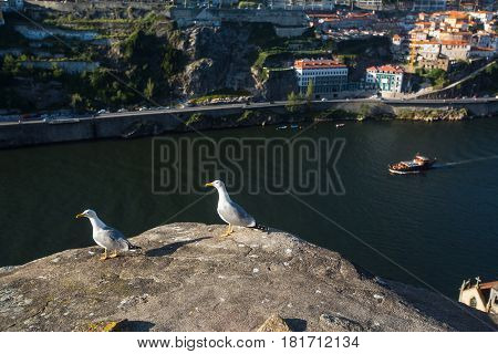 View of Douro river from the height of rocky shore Villa Nova de Gaia, Porto, Portugal.