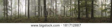 Panorama Landscape Image Of Wendover Woods On Foggy Autumn Morning.