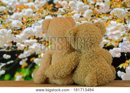 Back of a couple cute brown bears sitting on wood hugging each other with blurred pink Sakura blossoming background