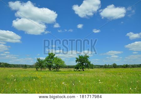 Climate Change and Global Warming. Meadow landscape. Beautiful Trees and flowers meadow with meadow salsify cloudscape. Meadow with lonely trees.