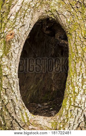 A large hole in a tree trunk.