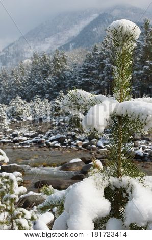 Mountain Creek In The Spring Snow. The Arshan Resort