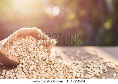 Millet Rice Or Millet Grains In Small Sack On Wooden Table. Outdoor Shooting With Sunlight And Blur