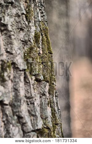 Texture Of The Tree Bark. Close-up. Nature