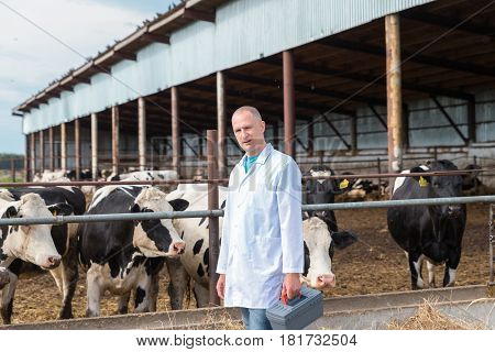 veterinarian in a white robe on cow farm