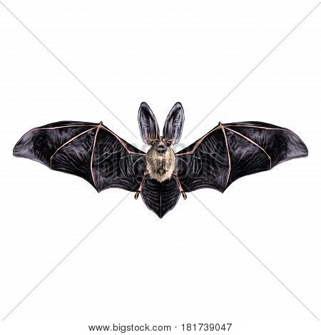 bat with open wings symmetrical pattern sketch vector graphics colored drawing