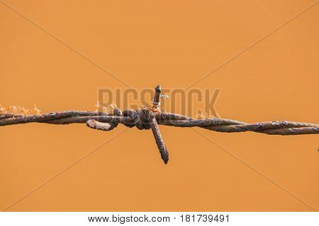 Old barbed wire and rust, ants on Orange background.
