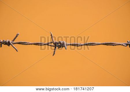 closeup rust barbed wire on Orange background.