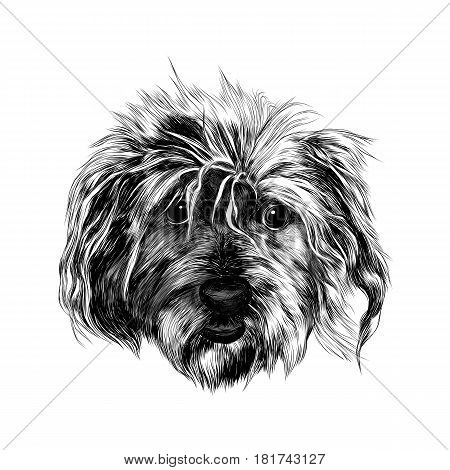 head shaggy dog funny sketch vector graphics black and white drawing