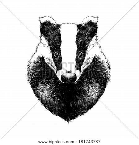 head badger symmetric sketch vector graphics black and white drawing