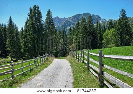 road, fence and fir in Durmitor Mountain, Montenegro