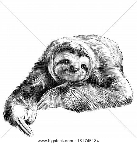 sloth lies with crossed legs looking right and smiling sweetly sketch vector graphics black and white drawing