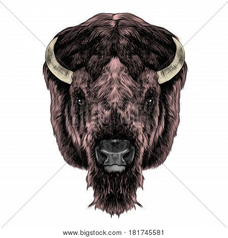 the Buffalo head is symmetrical looks right sketch vector graphics color picture