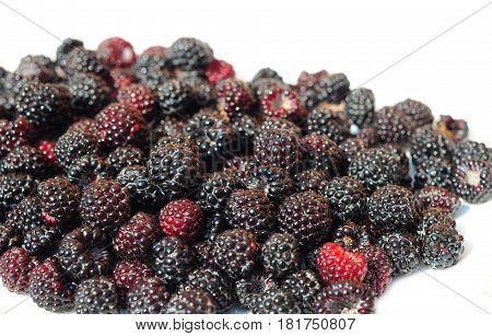Sweet Blackberry berry. Forest Blackberry. Freshly picked wild Blackberry. Wild Blackberry Photo.