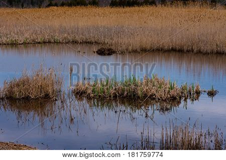 Brown and green grasses in the waters of a salt marsh
