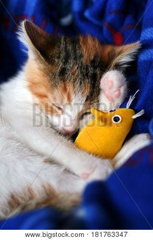 Calico kitten sleeping with her yellow mouse toy.